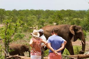 Elephant Encounters at the sanctuary