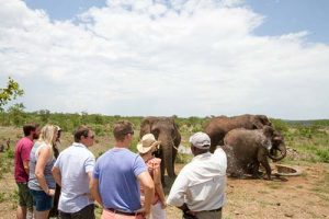 Elephant Activities - elephant orphanage