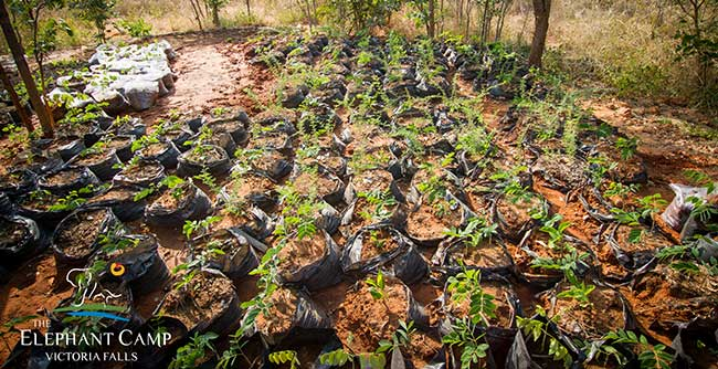 Community and Conservation tree nursery