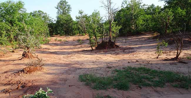 Soil Erosion Conservation