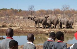 Teaching the community about Elephant Conservation and Education in Victoria Falls