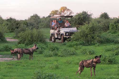 A game drive through the Zambezi National Park