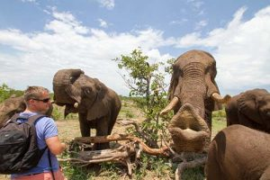 Elephant Activities in Vic Falls